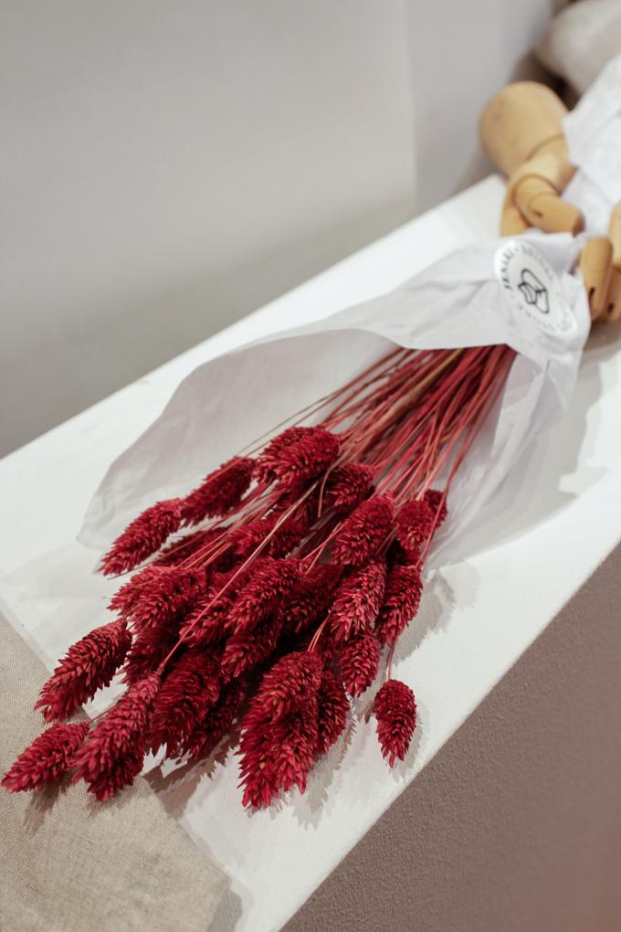 Phalaris in Rot